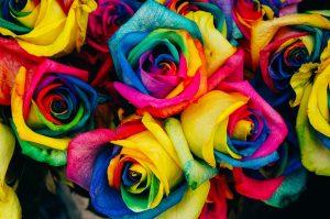 symbolika róży